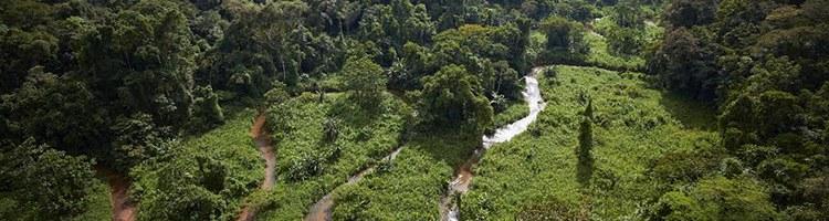 Floresta 4.jpg